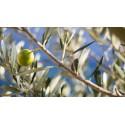 Bougie Naturelle  Parfumée Dédicace Provence : Mon Olivier